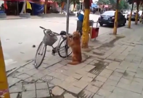 dog bike lock